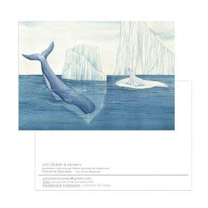 Carte «Un Océan à sauver – Banquise»