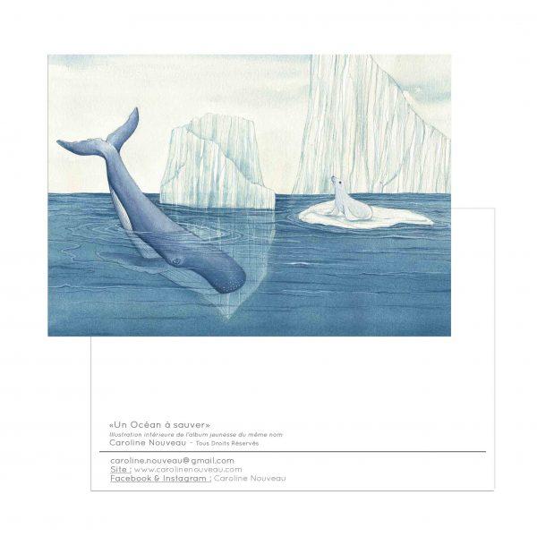 carte baleine phoque otarie ocean eau banquise glacier